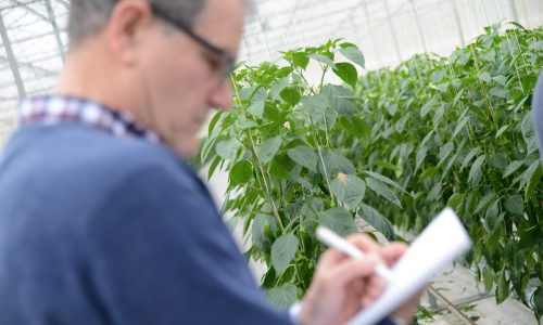 Crop Protection in Horticultural Crops